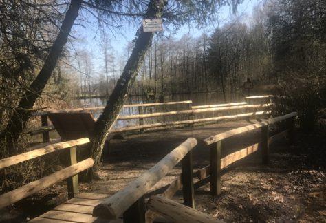 Blick Auf Waldsofa, Teich Und Abgesenkte Abgrenzung